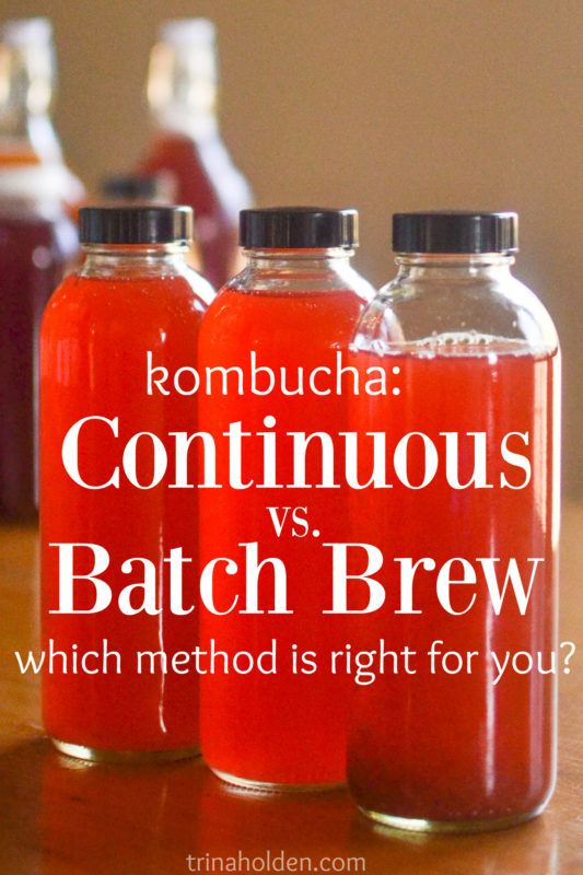 kombucha continuous batch brew